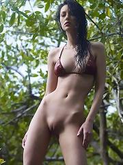 Anna S Tree Top